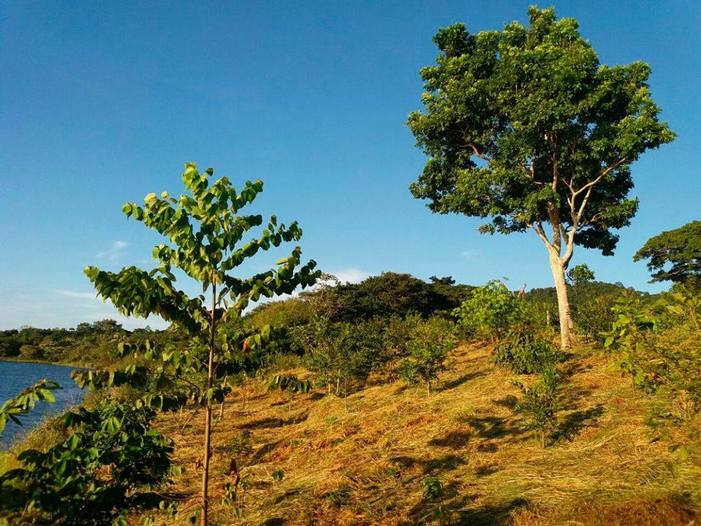 restauracao ecologica 1